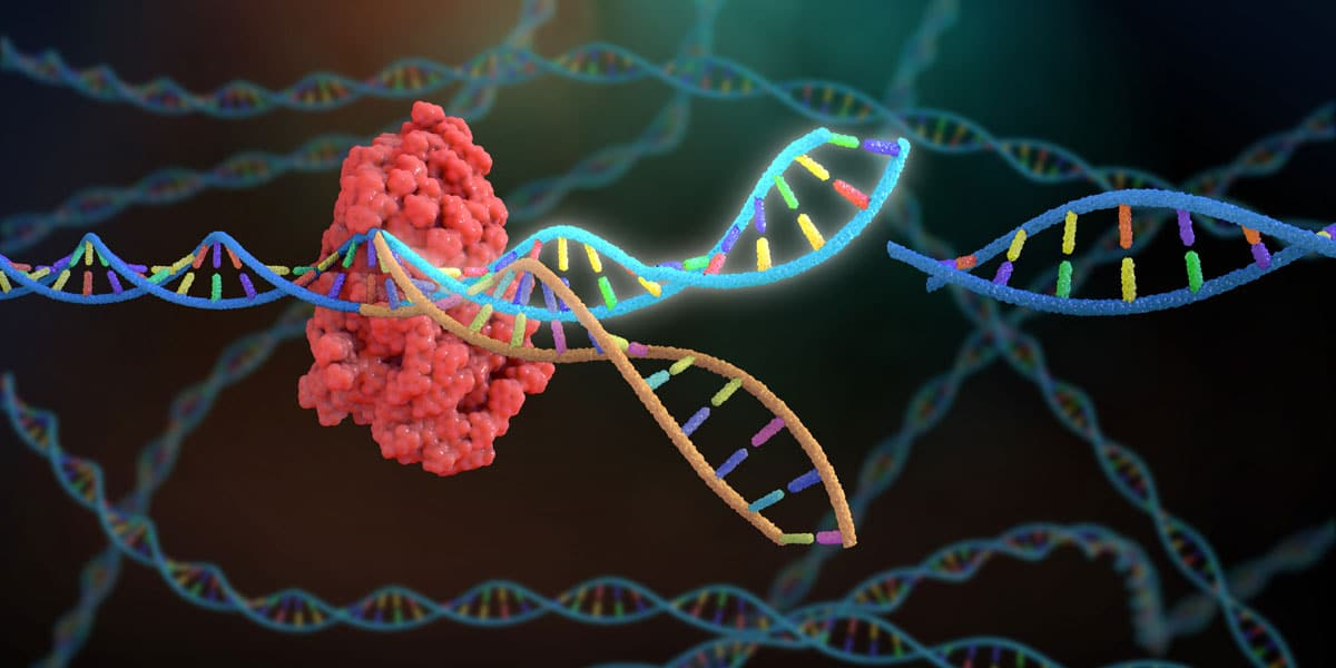 Image of CRISPR-Cas complex targeting DNA with gRNA