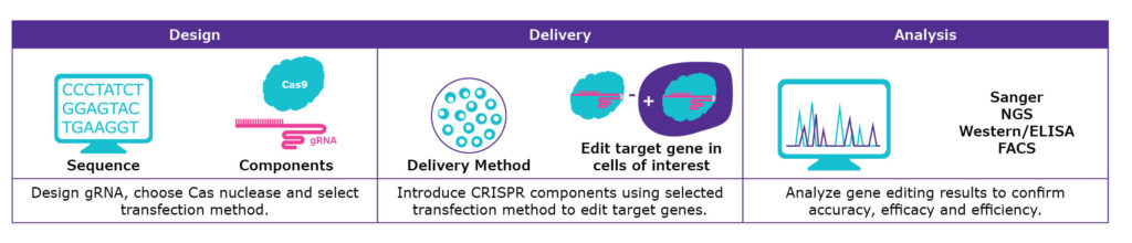 CRISPR design, delivery and analysis steps.