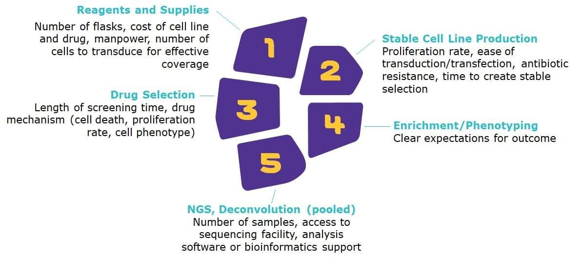Level Up Your Drug Screening With CRISPR