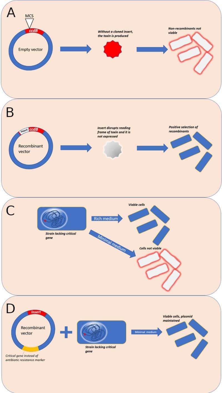 Selection Pressures: Alternatives to Antibiotics in Molecular Cloning