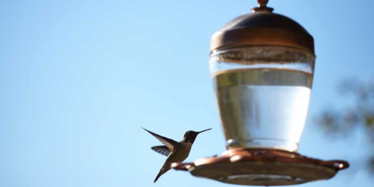 A bird feeder representing feeder cells providing nourishment to primary cells