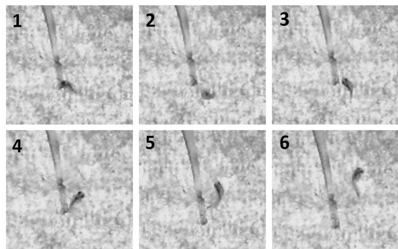Get a Move On: How to Measure Movement in Zebrafish