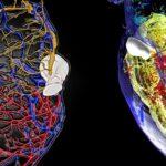 Mesoscopic Whole Organ Imaging - Of Experimental Models and Diagnostic Potential