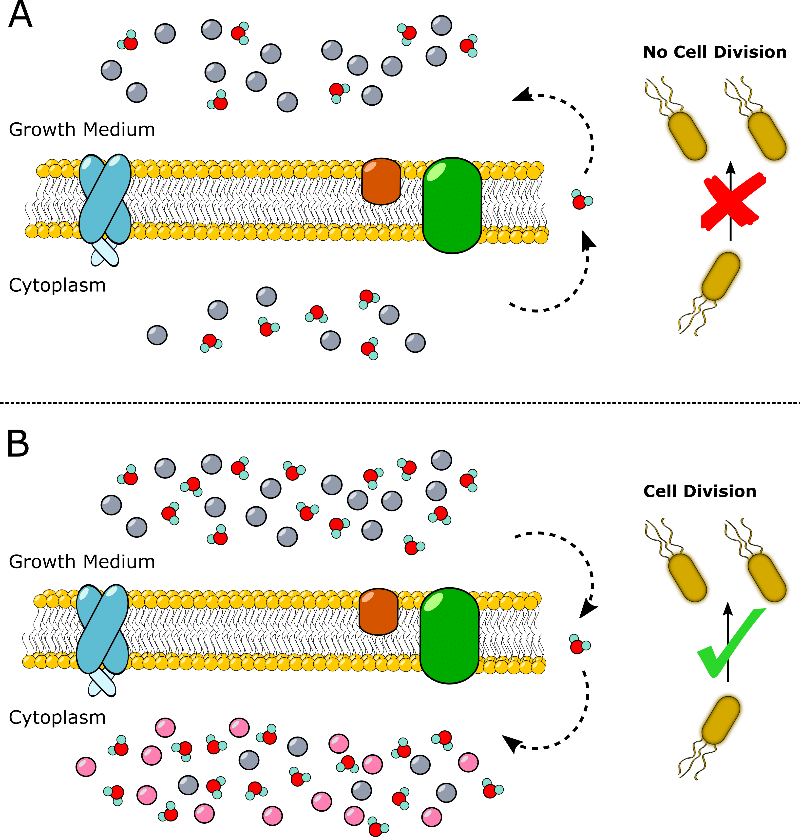 Improving the Expression of Insoluble and Inactive Proteins Using Osmotic Shock