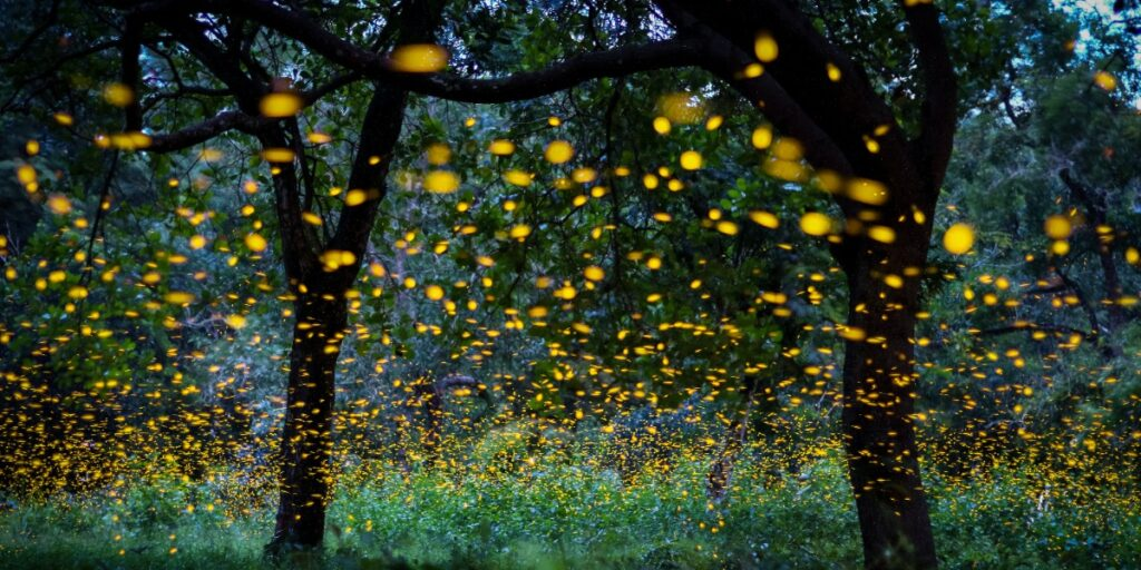 Image of fireflys in a forest as the enzyme used in the luciferase reporter assay comes from fireflys