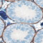 basic_methods_for_immunohistochemistry